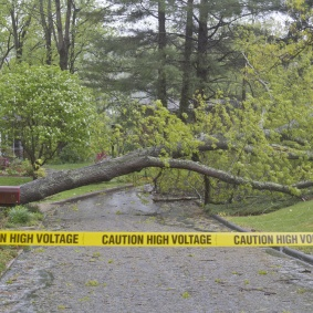 """A large oak tree is blown over by a strm taking down high voltage electric wires across a neighborhood street and is cordened off by yellow tape saying """"Caution, High Voltage."""""""